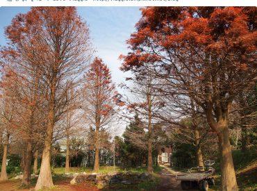到了VILAVILLA魔法莊園  印入眼簾就是一片花花草草 往莊園裡面走會先經過森林小步道