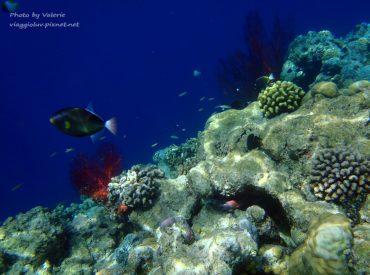來到帛琉浮潛  絕對不能錯過的潛點-大斷層 被選為世界七大潛點的第一名