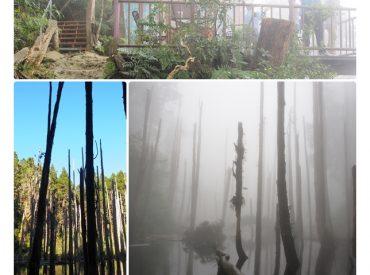 這次的台中旅行 終於有幸親眼見到這個童話迷霧般的忘憂森林