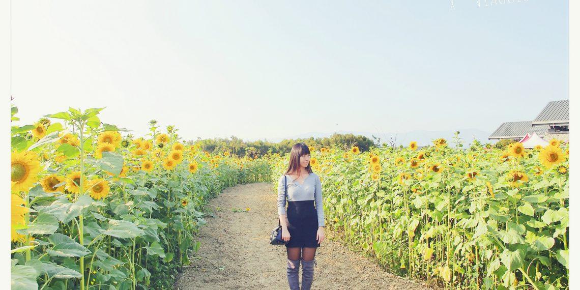 【高雄 Kaohsiung】迷路在向日葵花海中 全國最大葵花迷宮 杉林美濃春暖花開