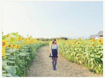 看到這一大片的向日葵花海  心情都被療癒了 在高雄杉林的永齡農場有著全國最大的向日葵花田  佔地達七公頃