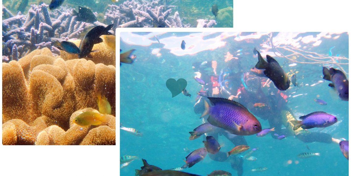 【澎湖 Penghu】七美浮潛 遇見澎湖最美麗海洋 媲美帛琉的繽紛珊瑚群與熱帶魚