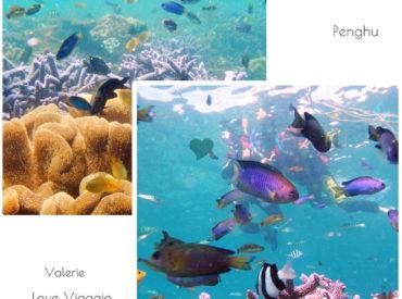 我們在七美遇見了澎湖最美麗的海洋 原來七美除了雙心石滬  還有奇幻繽紛的海底世界