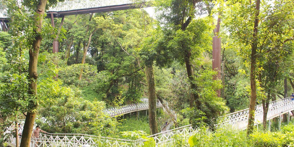 【嘉義 Chiayi】竹崎親水公園午後散步 天空走廊與花仙子步道 沉浸森林裡的芬多精