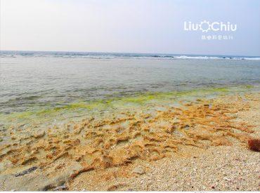 潮間帶指的是大潮時介於最高潮和最低潮的區塊 來到多仔坪一帶海灘  也是是海龜的保護區