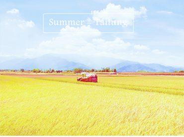 稻作成熟的伯朗大道是最美的時候  金黃稻田搖曳在台東縱谷之中 我們來的時候正在採收  往年都在7 8月今年則比較早 不過依然還可欣賞一大片成熟的稻穗  隨風輕拂形成稻浪