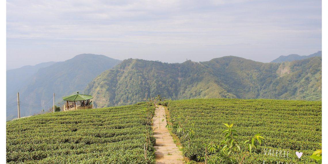 【南投 Nantou】軟鞍八卦茶園廣告拍攝地 海拔一千公尺眺望竹山與茶園風光