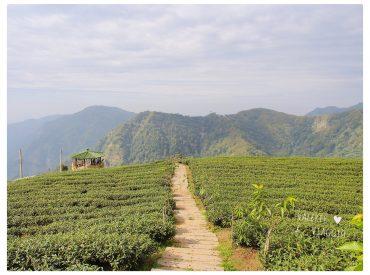 深入南投竹山  穿過一座又一座的山 有時候是蜿蜒小路  沒什麼人車 有時候又是一片群山美景 這一段不算短的路程  我們終於來到海拔一千三百公尺的八卦茶園