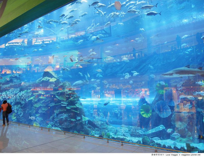 杜拜水族館 @薇樂莉 Love Viaggio | 旅行.生活.攝影