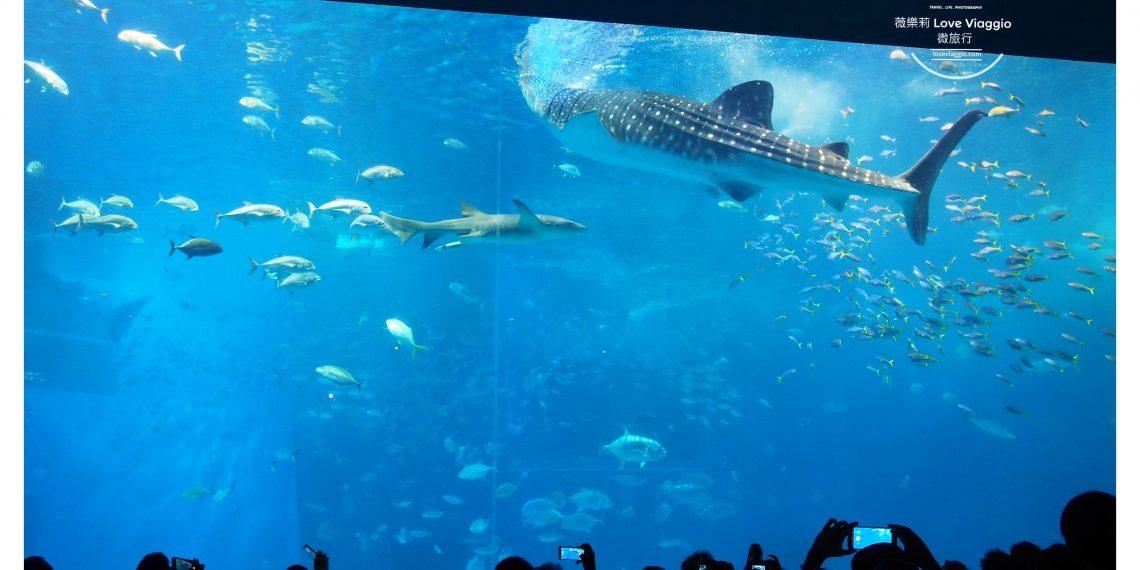 【沖繩 Okinawa】美麗海水族館 巨大水族箱欣賞悠游的鯨鯊和鬼蝠魟 療癒的鯨鯊進食秀影片