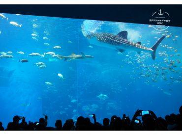 沖繩的第一天我們直奔美麗海水族館 也是沖繩的人氣景點 最有名的莫過於7,500 m³的巨大水槽欣賞鯨鯊和魟魚  還有療癒的鯨鯊餵食秀