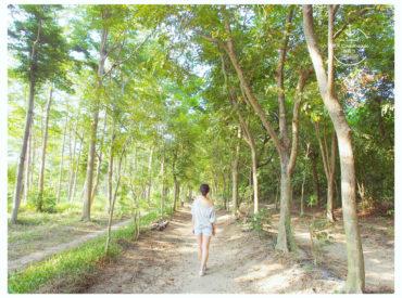 來到台南的虎山林場 這裡有一排排小葉欖仁森林步道 選在一個假日午後 散步林間享受綠意和陽光 走在高聳樹木的林蔭小路別有一種異國情調