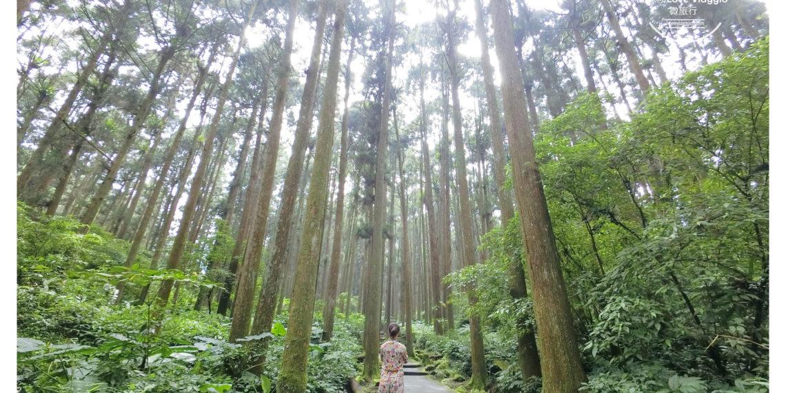 【南投 Nantou】溪頭自然教育園區 穿梭高聳的柳杉樹林 沐浴大自然的芬多精