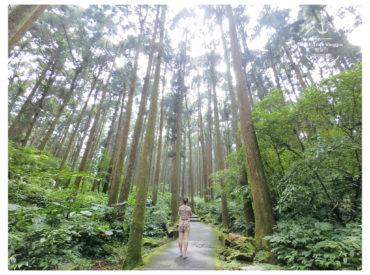 走進溪頭 穿梭在杉木 銀杏 紅檜林群之中 這裡三面環山 可以恣意享受大自然 沐浴在森林陽光的芬多精 慢步其中心情也不自覺的愉悅放鬆